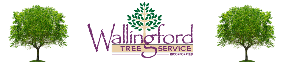 Wallingford Tree Service – Connecticut Tree Services