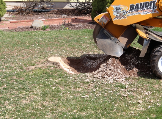 Stump Grinding – Before